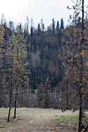 Forest fire aftermath somewhere between Twisp and Okanogan in the Okanogan region of Washington State, USA