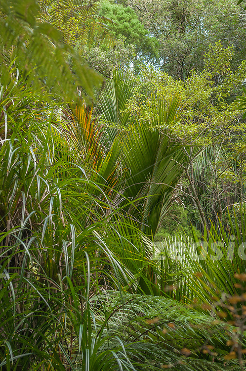 Kauri Park, situated in the western heart of Auckland, is an amazing patch of regenerating Kauri forest. A pleasant stroll to supermarket makes for a jungle adventure. Snapshots from an evening stroll around my neighbourhood.