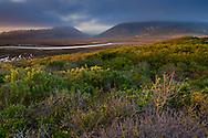Fog at sunset over the Elfin Forest and Morro Estuary Natural Preserve, near Morro Bay, California