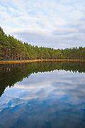 Mirroring Pines (Pinus sylvestris) on coast of small lake in late autum day, near Cirgaļi, Vidzeme, Latvia Ⓒ Davis Ulands   davisulands.com