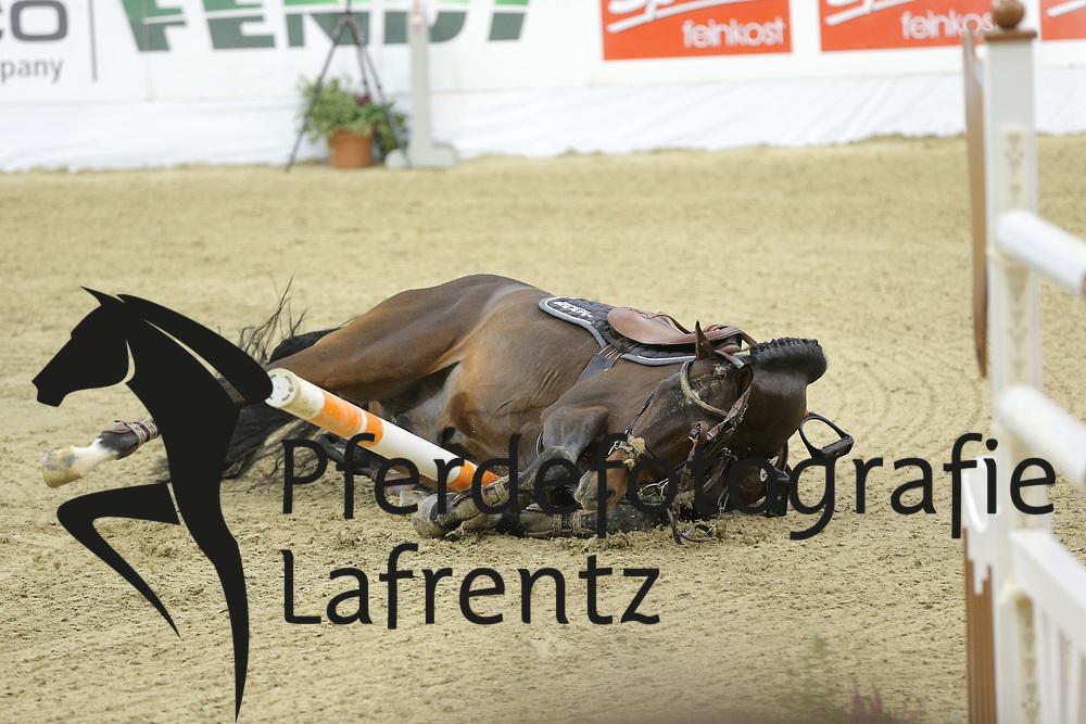 Klatte, Guido jun. Collado<br /> Oldenburg - Oldenburger Pferdetage 2013<br /> Internationales Springen<br /> © www.sportfotos-lafrentz.de / Stefan Lafrentz