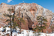 Spring snow coats red sandstone and melts on the West Rim Trail on the way to Angels Landing and Scout Lookout, Zion National Park, Springdale, Utah, USA. The North Fork of the Virgin River carved spectacular Zion Canyon through reddish and tan-colored Navajo Sandstone up to half a mile (800 m) deep and 15 miles (24 km) long. Uplift associated with the creation of the Colorado Plateaus lifted the region 10,000 feet (3000 m) starting 13 million years ago. Zion and Kolob canyon geology includes 9 formations covering 150 million years of mostly Mesozoic-aged sedimentation, from warm, shallow seas, streams, lakes, vast deserts, and dry near-shore environments. Mormons discovered the canyon in 1858 and settled in the early 1860s. U.S. President Taft declared it Mukuntuweap National Monument in 1909. In 1918, the name changed to Zion (an ancient Hebrew name for Jerusalem), which became a National Park in 1919. The Kolob section (a 1937 National Monument) was added to Zion National Park in 1956. Unusually diverse plants and animals congregate here where the Colorado Plateau, Great Basin, and Mojave Desert meet.