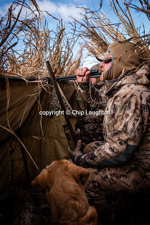 waterfowl, duck, hunting, stock, photo, image, photography