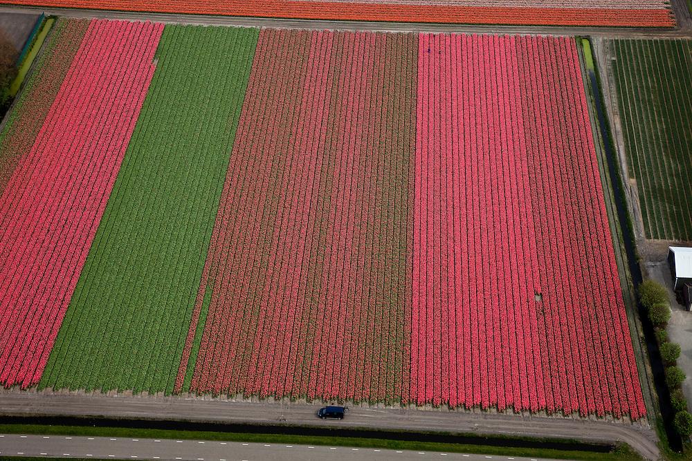 Nederland, Noord-Holland, Gemeente Anna Paulowna, 28-04-2010; bloembollenvelden in de Anna Paulowna Polder met voornamelijk tulpen. Door de zandgrond is de polder in Kop van Noord-Holland (Noordkop) is een ware bollenstreek..Flower fields in the Anna Paulownapolder, with mostly tulips. Because of the sandy soil the polder in the very north of North-Holland is a true flower bulb region. .luchtfoto (toeslag), aerial photo (additional fee required).foto/photo Siebe Swart