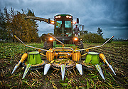 John Deere Forager harvesting wind blown corn in Skagit Valley, Washington.