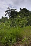 Fiji, rainforest