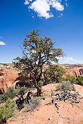 Navajo National Monument, Arizona