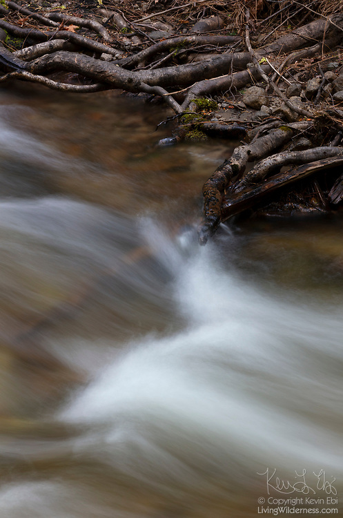 Exposed roots from trees reach into the waters of Tenaya Creek in Yosemite National Park, California.