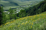 Wildflowers in Crested Butte, Colorado.