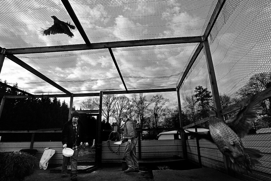Recovering opiate addicts Justin B. and Cole M. work together as a team while they feed quail at Recovery Works. The quail are raised from eggs and once mature killed and eaten. A fundamental philosophy at the alcohol and drug recovery center is that a man should learn to become responsible and productive.