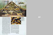 Publication LE FIGARO MAGAZINE (France), No. 1467, December 6, 2008..Photography by Heidi & Hans-Jürgen Koch/animal-affairs.com