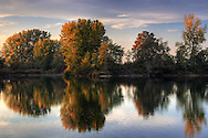 The beautiful low angled light of sunset shines on the branches and leaves of a group of trees at the Po River bank nearby Carignano in Piedmont, Italy