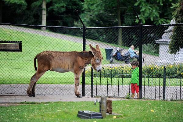 Nederland, Nijmegen, 2-8-2012Hertenkamp in het Kronenburgerpark.Foto: Flip Franssen/Hollandse Hoogte