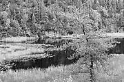 Milles Creek wetland, Near Sioux Lookout, Ontario, Canada