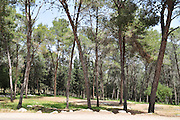 Israel, Carmel Mountain's pine tree Forest