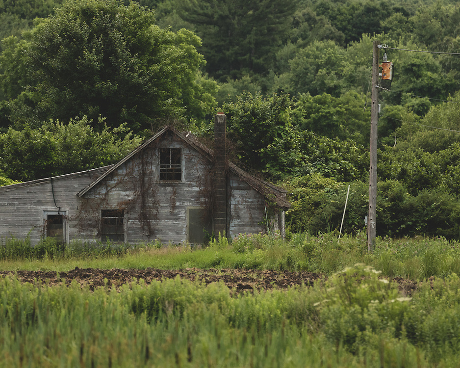An abandoned house melding into the landscape of Concord.