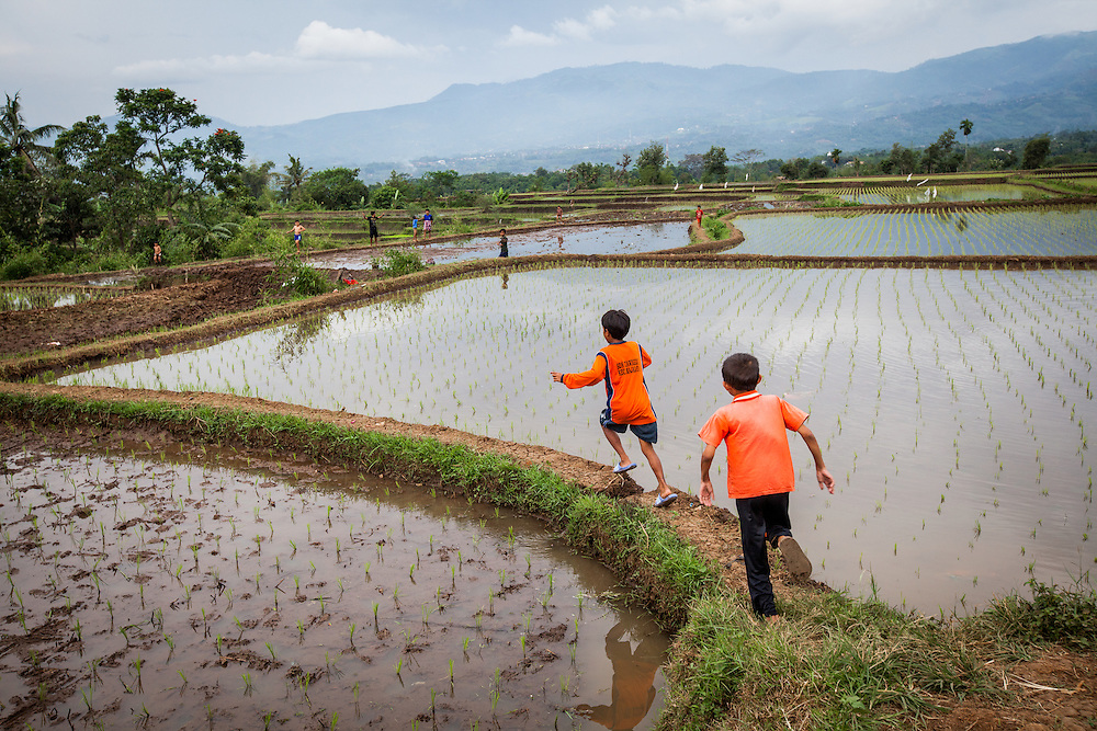Children playing on the rice field around Ciawigede village. The water supply is still pristine, untainted by toxic wastes...Credit: Andri Tambunan for Greenpeace