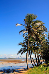 AUSTRALIA QUEENSLAND CALEN 21FEB08 - Palm trees line a beach in northern Queensland...jre/Photo by Jiri Rezac..© Jiri Rezac 2008..Contact: +44 (0) 7050 110 417.Mobile:  +44 (0) 7801 337 683.Office:  +44 (0) 20 8968 9635..Email:   jiri@jirirezac.com.Web:    www.jirirezac.com..© All images Jiri Rezac 2007 - All rights reserved.