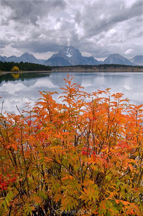 Mount Moran, Jackson Lake and Sumac in Fall, Grand Teton National Park, Wyoming