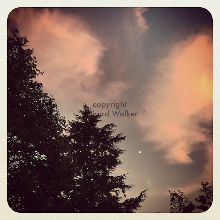 2015 August 22 - Evening sky with clouds and evergreen trees, Seattle, WA, USA. Taken/edited with Instagram App for iPhone. By Richard Walker