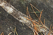 Texture of a rock, with striation, covered in pine needles.