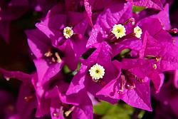 Flora Mountain Scenicflora Mountain Scenic