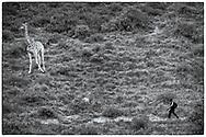 05-11-2017 Foto's genomen tijdens een persreis naar Buffalo City, een gemeente binnen de Zuid-Afrikaanse provincie Oost-Kaap. Areena Riverside Resort - Giraffe vs man