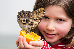 © Licensed to London News Pictures. 31/03/2015. London, UK. A young girl with a butterfly at the Sensational Butterflies exhibition at the Natural History Museum in London. The Sensational butterflies exhibition runs at the Natural History Museum in London from 2 April 2015 to 13 September 2015. Photo credit : Vickie Flores/LNP