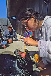 Brushing Teeth Of Harbor Seal