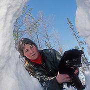 Karen Noyce returns a black bear (Ursus americanus) cub to the den after taking data for research. Minnesota