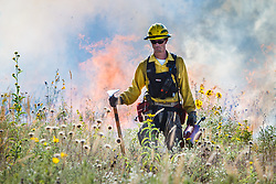 Fire specialist lighting prescribed burn with drip torch on the Blackland Prairie at Clymer Meadow Preserve, Texas Nature Conservancy, Greenville, Texas, USA.