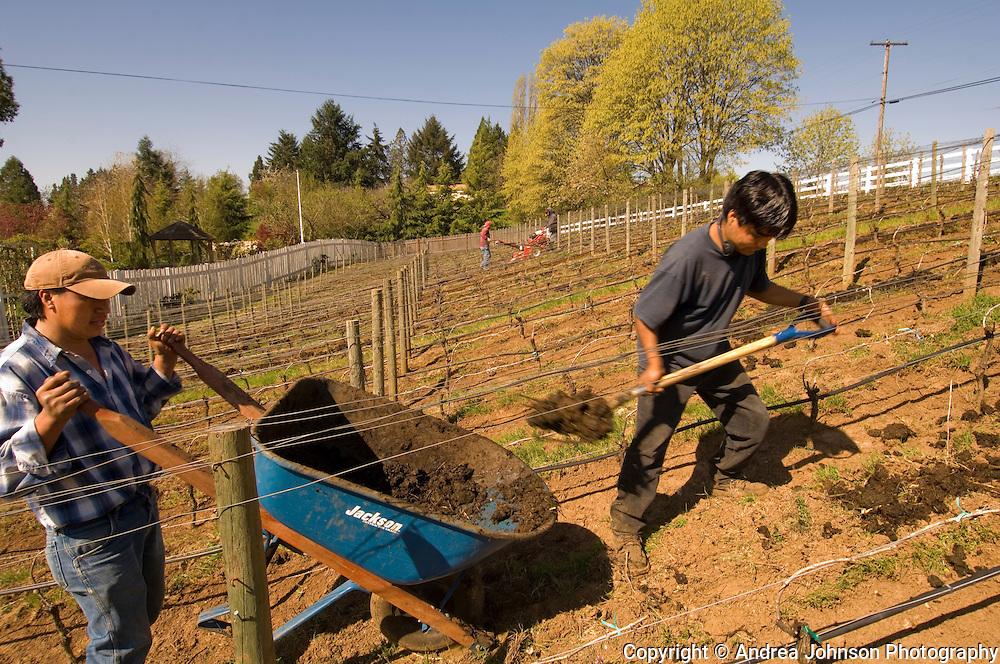 Spreading compost over Bergstrom's biodynamic vineyards, Dundee Hills, Willamette Valley, Oregon