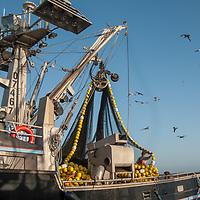 A commercial fisherman stacks nets on a boat docked at Pillar Point Harbor near Half Moon Bay, California.