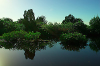 Can You Find the Alligator? Reflections on a Canal along Black Point Wildlife Drive in Merritt Island National Wildlife Refuge. Image taken with a Leica X2 camera (ISO 100, 24 mm, f/5.6, 1/2000).
