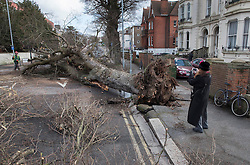 © Licensed to London News Pictures. 28/03/2016. Brighton, UK. A woman photographs a fallen tree as storm Katie hits the south coast. Photo credit: Peter Macdiarmid/LNP