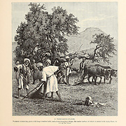 A threshing-floor. Peasants winnowing grain with large wooden forks, and a team dragging a sledge, the under surface of which is armed with sharp flints, to cut up the straw from the book Picturesque Palestine, Sinai, and Egypt By  Colonel Wilson, Charles William, Sir, 1836-1905. Published in New York by D. Appleton and Company in 1881  with engravings in steel and wood from original Drawings by Harry Fenn and J. D. Woodward Volume 1