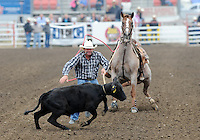 Dennis Luetge, from Hempstead, Texas has his eyes on the prize during Friday night's events at the 2013 California Rodeo Salinas.