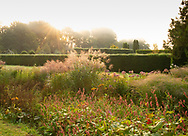 Persicaria affinis and Stipa giganta at sunrise at Waterperry Gardens, Waterperry, Wheatley, Oxfordshire, UK