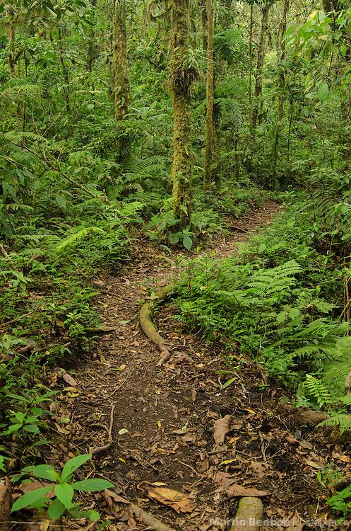The Cano Negro Trail, Santa Elena Cloud Forest Reserve, Costa Rica