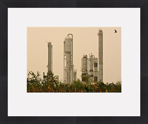 Petroleum Refinery and Osprey  Carrying Fish, Venice, Louisiana (Framed Art Print)