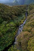 Koolau Forest Reserve, Hana Coast, Maui, Hawaii