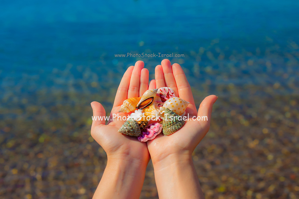 Hands present seashells on the beach first person view