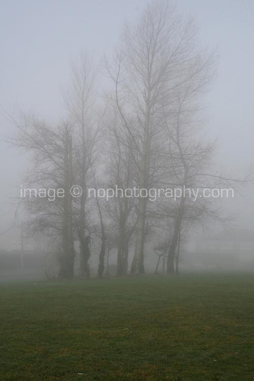 Trees in early morning fog in Dublin Ireland