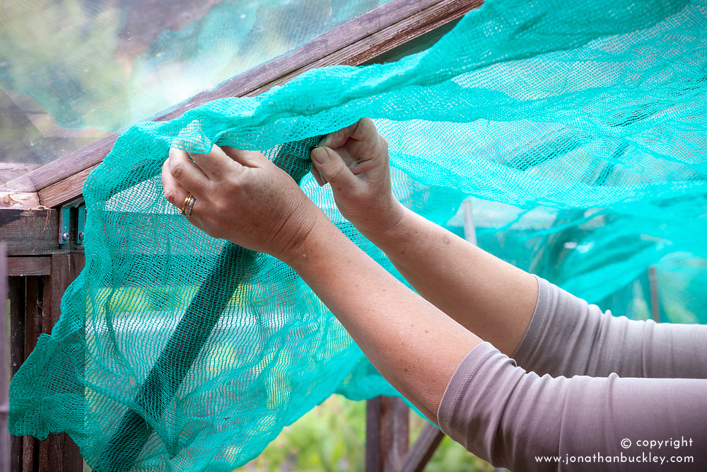Putting up greenhouse shading to protect plants from scorching  in summer