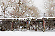 Winter fence with chilis