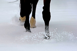 Horses in the snow<br /> Stoeterij Van de Helle - Putte 2009<br /> Photo© Dirk Caremans