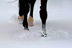 Horses in the snow<br /> Stoeterij Van de Helle - Putte 2009<br /> Photo© Dirk Caremans
