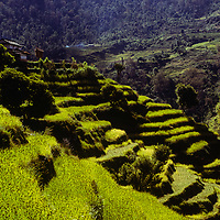 Verdant rice paddies stretch up the lower slopes of the Annapurna massif in the Nepal Himalaya.