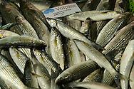 Fresh Volpine - Venice Rialto Fish Market