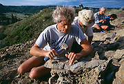 Paleontologist Phil Currie's excavates near Dinosaur Provincial Park, a site previously discovered in the early 1900's by Barnum Brown of the American Museum of Natural History that contained Albertasaurs.  Circa 1999